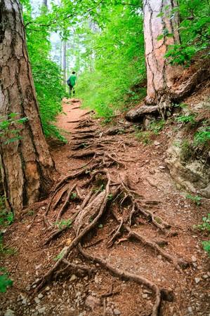 winding path through savannah forest with sun beams photo