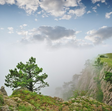 Autumn landscape, tree in a fog on a grey background photo