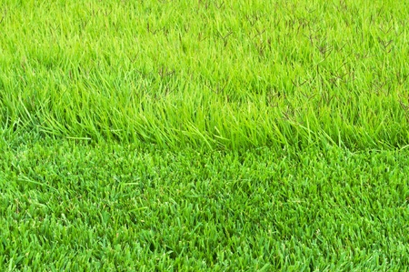 border trimmed and overgrown grass on the lawn Stock Photo - 10922883