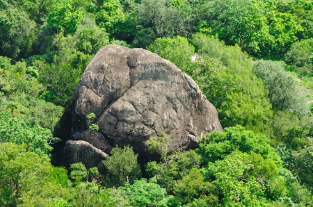 rock in the jungle in the form of elephant. Bird's-eye view. Stock Photo - 11866786