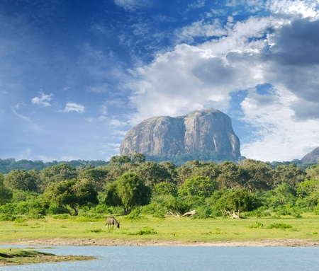 mountain in the shape of an elephant figure in the Yala National Park (Sri Lanka) Stock Photo - 12565569
