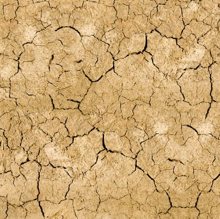 Clay soil with cracks without water. soil erosion photo
