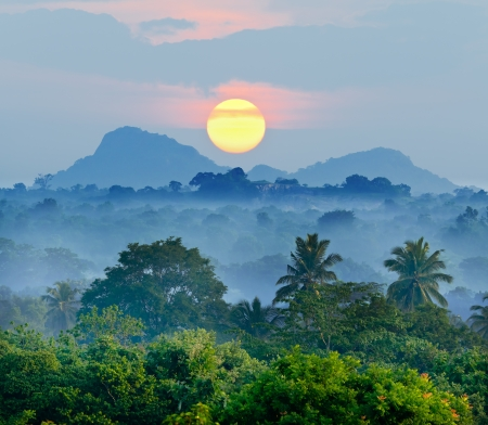 sunrise in the jungles of Sri Lanka