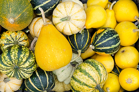 pile of decorative gourds as rural background photo