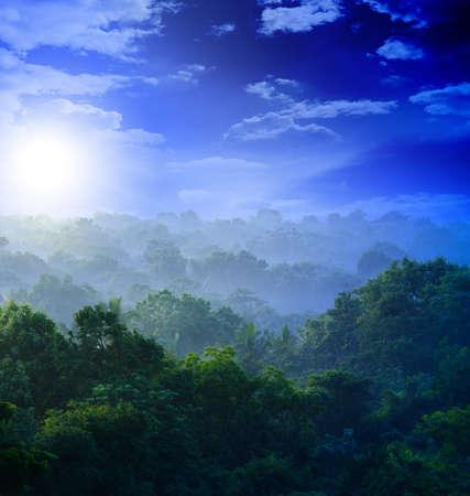 nature silhouette: sunrise in the jungles of Sri Lanka