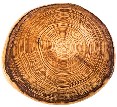 Wood circle texture slice background Imagens