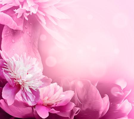 Mooie Roze Pioen in een tuin. Ondiepe diepte van het veld voor een zachte, artistieke uitstraling. Stockfoto