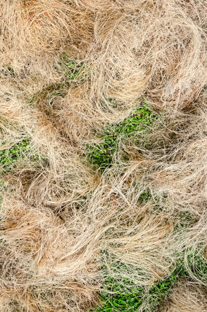 copra: A pile of processed copra fibre waiting to be bailed at a village factory in Sri Lanka