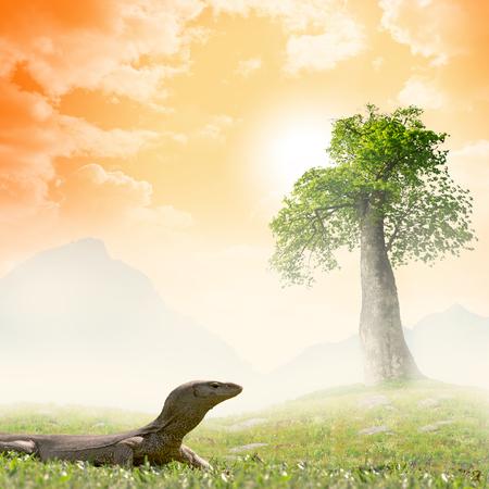 lizard in field: El monitor de Bengala (Varanus bengalensis) o el monitor indio com�n, es un lagarto de monitor