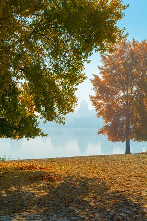 Picturesque autumn tree by the lake