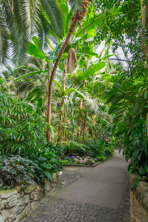 heinrich: FRANKFURT, GERMANY - May 21, 2016: palms inside the palmengarten in Frankfurt, Germany. The Palmengarten is one of two botanical gardens in Frankfurt and the largest garden of its kind in Germany.