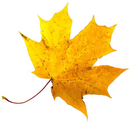 Collection of autumn leaves. Isolation with clipping paths Archivio Fotografico - 132071253