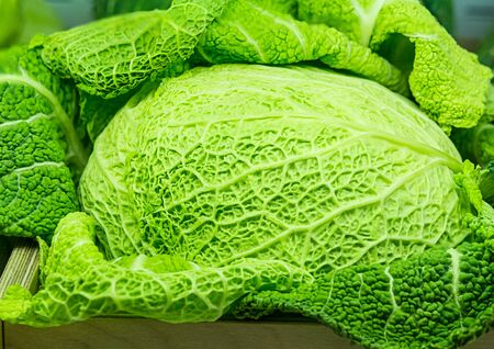 Green fresh whole Savoy cabbage close up