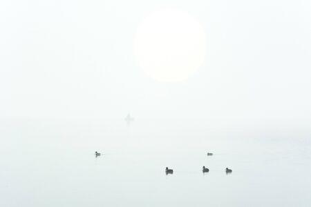 Beautiful landscape with wild ducks in the morning fog Zdjęcie Seryjne