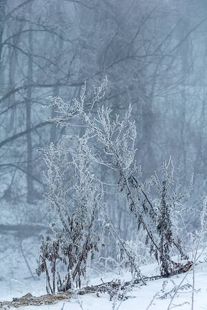winter landscape, trees in the frost