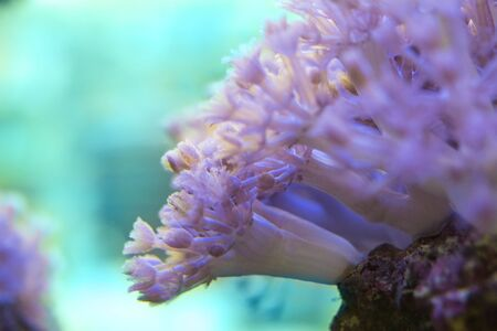 Living corals are very close