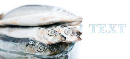 Salted in fine brine small ocean fish