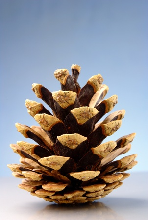 disclosed: disclosed on a blue pinecone gradient background
