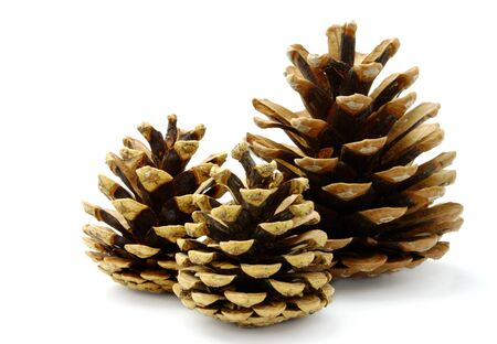 group of three pine cones on white background photo