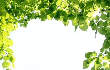 green leaves on a branch in a forest Reklamní fotografie