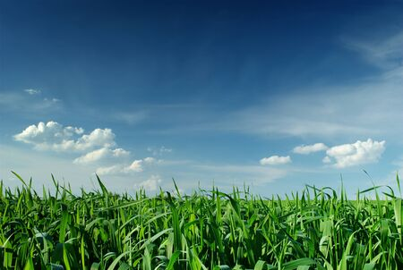 panoramic views of the countryside, field and sky photo