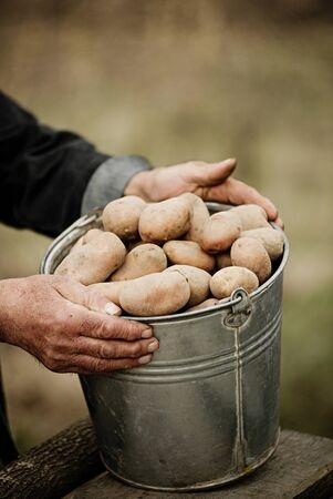manos sucias: De cerca de un cubo de patatas en manos del agricultor en el fondo del jardín Foto de archivo
