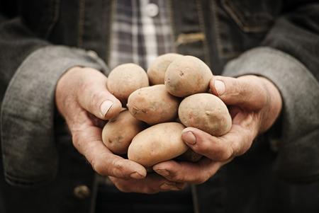 家庭菜園の背景にジャガイモを保持している男性の手のクローズ アップ 写真素材