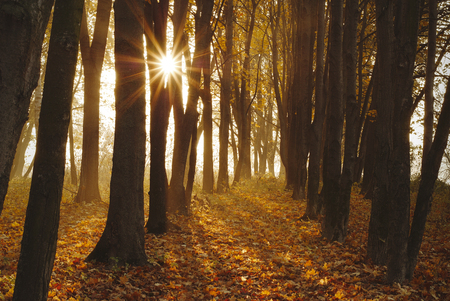 Autumn forest. Sun rays in the forest. Stock Photo
