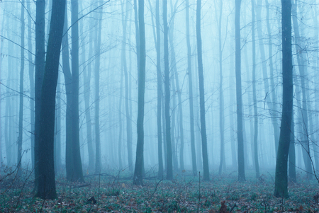 Thick fog in the autumn forest. Fallen foliage.