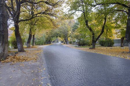 Paved urban street lined with deciduous trees in autumn or fall with fallen colorful leaves on the ground in a low angle receding view