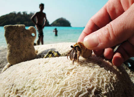 tresure: This photo was taken near Ko Chang island in 2011 of January. Not hardness to see crayfishs and corals at the banks of Thailand, but it is rarely possible to notice them in such combination ashore. And at once there is a desire to touch... Stock Photo