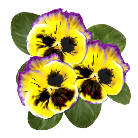 Realistic Pansy Vector Flower. Floral Illustration. Viola Tricolor Beautiful Spring Season Blossom. Botanical Flora Growing. Yellow Petal with Green Foliage. Fresh Nature Herbal Macro. Illustration