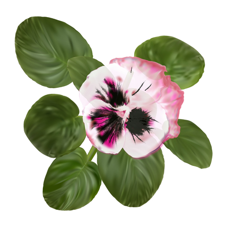 Realistic Violet. Pansy Flower. Viola Tricolor Bloom. Rose Watercolor Petals with Leaves Illustration. Luxury Spring Colorful Blossom Clipart for Greeting Card or Wedding Invitation. Ilustração