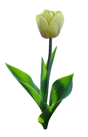 Tulip. Vector Flower with Leaves. 3d Realistic Illustration. Yellow Bud with Green Leaf. March Season Floral Plant. Birthday or Wedding Decoration. Elegant Bloom Flora Element. 向量圖像