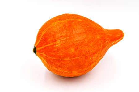 Pumpkin isolated on white background. autumn food. Fresh single ripe pumpkin. Natural squash for halloween or thanksgiving decoration, small sweet concept. Fall nowember agriculture