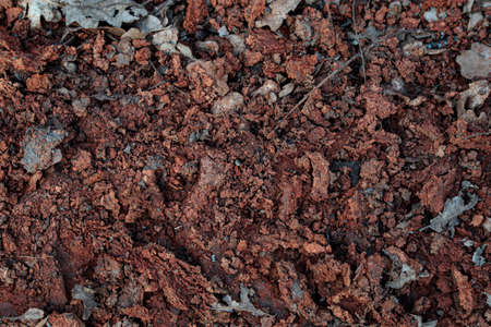 Red clay. Red soil background, earth texture, durt. Organic mud in woods. Nature landscape pattern