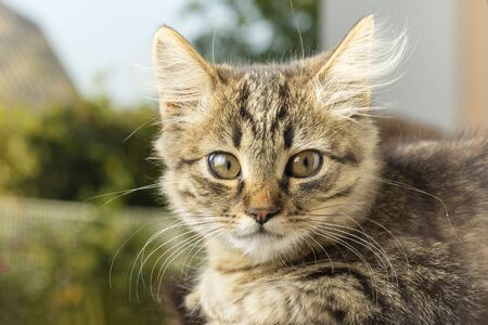 excited gray with brown striped cat with eyes wide open closeup on a dark blurred background. Portrait of confused domestic cat Stok Fotoğraf