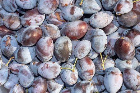 blue ripe plum background texture. Macro photo. Harvest a concept Zdjęcie Seryjne
