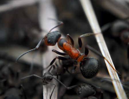 Ant at the wood stick top view Stock Photo