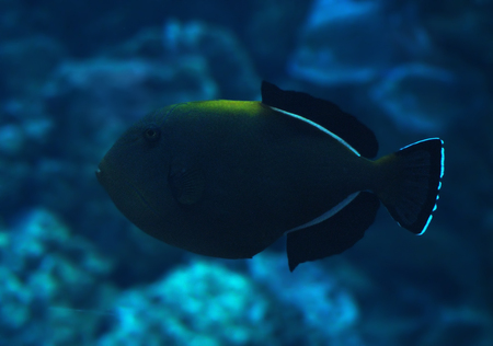 Fish big dark sweaming at the deep blue ocean Stock Photo