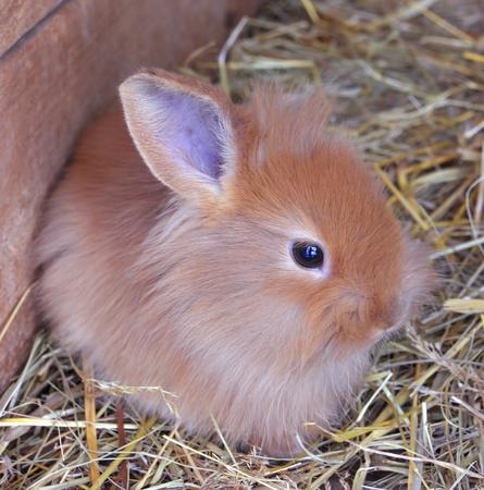 rabit: Ravvit baby cute at the hay