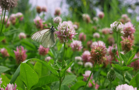 White butterfly on the red flower