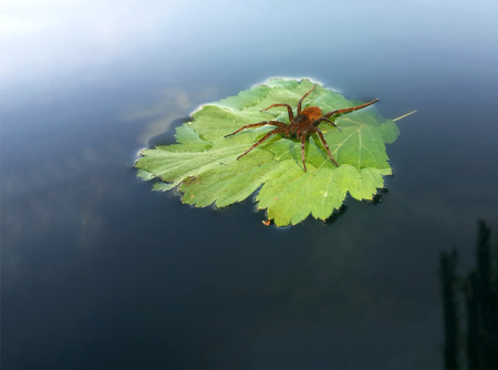 Red spider with water drop on the green leaf at the lake travels