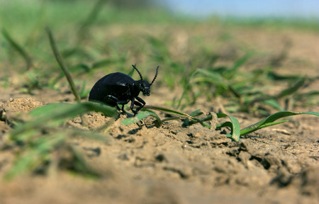 Black bug devil is running to hell Stock Photo
