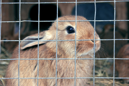 rabit: Rabbit in the cell