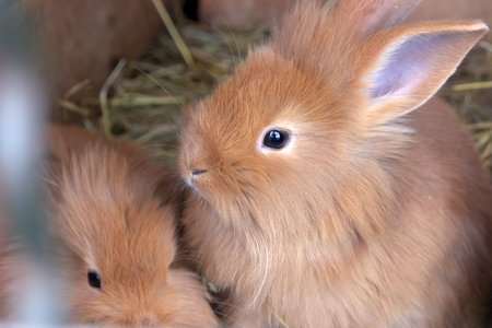 Rabbit with cute baby Stock Photo