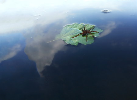 Red spider traveler with water drop on the green leaf at the lake going away Stock Photo