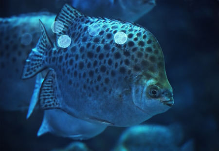 Big spotted fish at the deep ocean