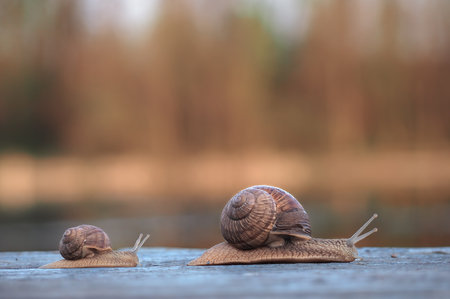 Snails race big winning gracefully small losing view from side