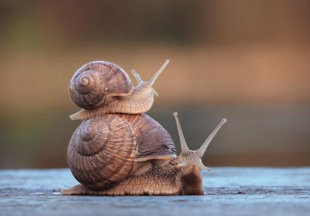 Escargots petit voyage au grand Banque d'images - 78592312